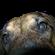 View Mallychor's Profile